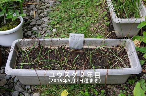 20200831yusuge_planter_2y_20190502_01.jpg