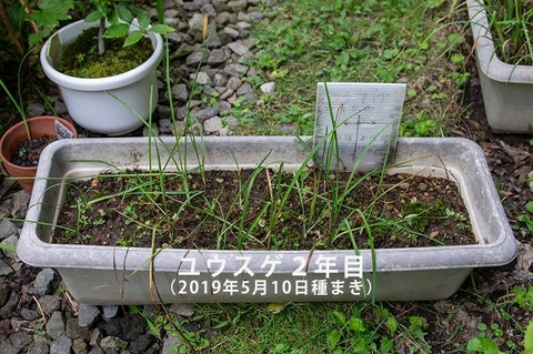 20200831yusuge_planter_2y_20190510_01.jpg