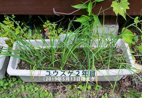 20200831yusuge_planter_2y_20190513_01.jpg