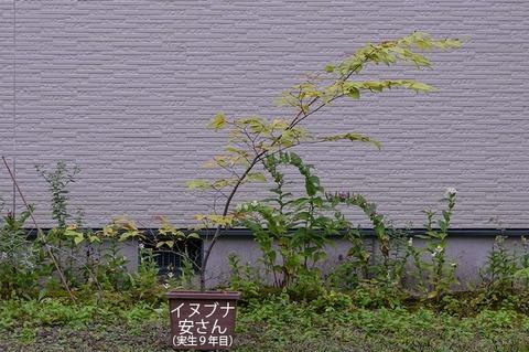 20200913inubuna9y_an_00.jpg