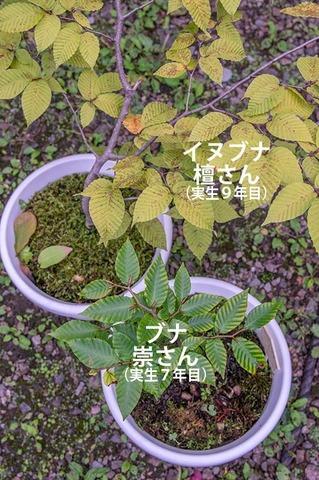 20200913inubuna9y_dan_04.jpg