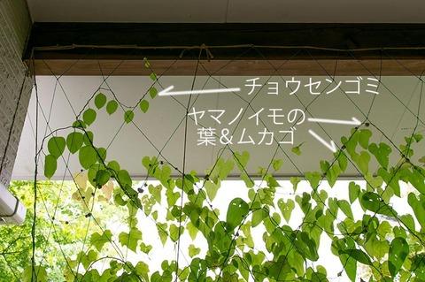 20201004midori03gomishi_mukago.jpg
