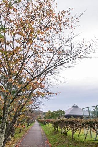 20201005yagasaki-sakura01.jpg