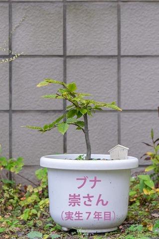 20201012buna_su_7y_00.jpg