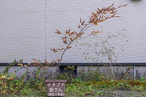 20201012inubuna9y_an_00.jpg