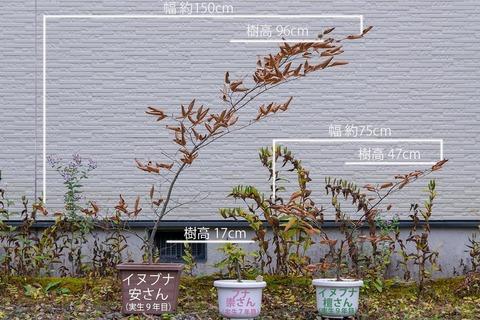 20201022inubuna9y_an_dan_buna7y_su01_re.jpg