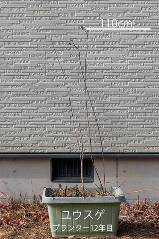 20201126yusuge_planter12y_01.jpg