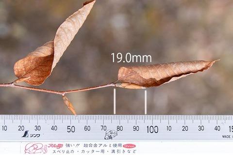 20210320inubuna10y_an_02.jpg