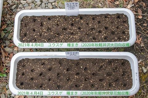 20210404yusuge_planter_1y_20210404_01.jpg