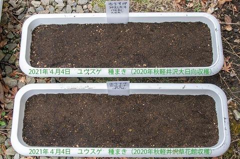 20210404yusuge_planter_1y_20210404_02.jpg