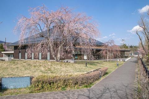 20210420yagasaki-shidare-sakuraB01.jpg