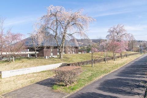 20210424yagasaki-shidare-sakuraA01.jpg