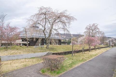20210428yagasaki-shidare-sakuraA01.jpg