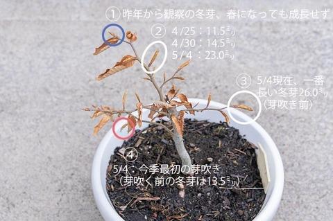 20210504buna_su_8y_03.jpg