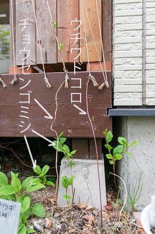 20210505midori_uchiwadokoro01.jpg