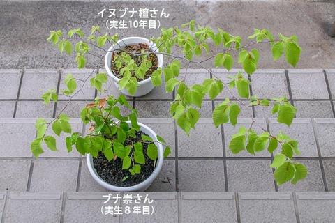 20210517inubuna10y_dan_02.jpg