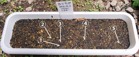 20210517yusuge_planter_1y_20210404_oohinata01.jpg