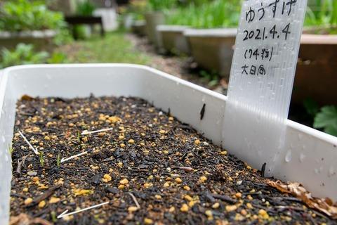20210517yusuge_planter_1y_20210404_oohinata02.jpg