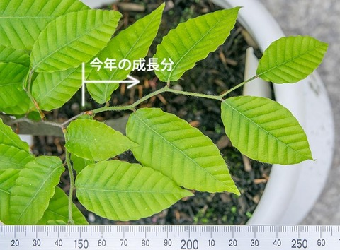 20210523buna_su_8y_02.jpg