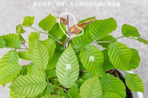 20210523buna_su_8y_03.jpg