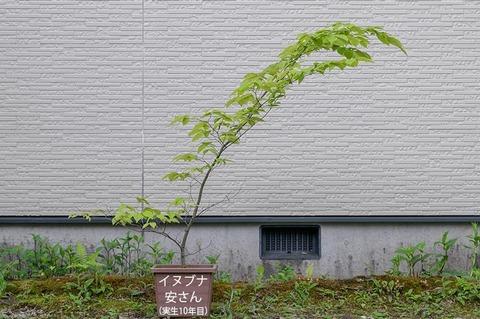 20210523inubuna10y_an_00.jpg