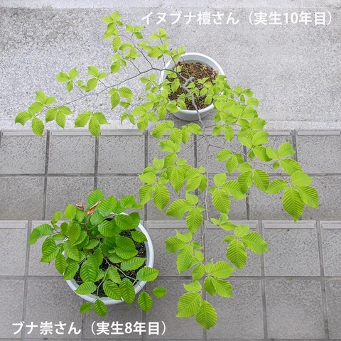20210523inubuna10y_dan_buna8y_su_01.jpg