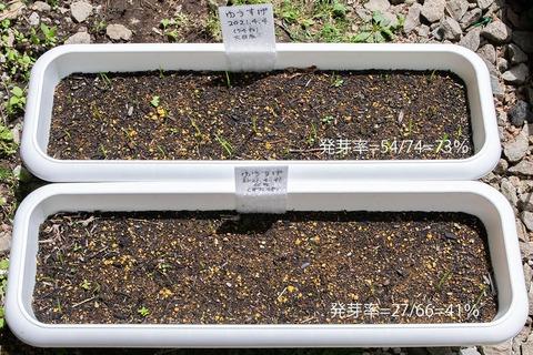 20210524yusuge_planter_1y_20210404_01.jpg