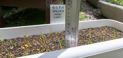 20210524yusuge_planter_1y_20210404_oohinata01.jpg