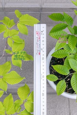 20210602inubuna10y_dan_buna8y_su_02.jpg