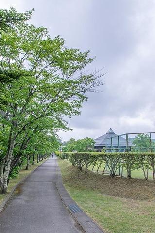 20210603yagasaki-sakura01.jpg
