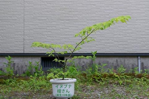 20210612inubuna10y_dan_00.jpg
