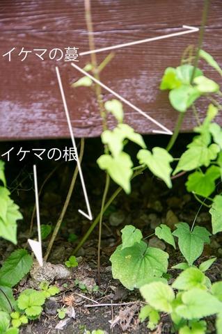 20210626midori_ikema02.jpg