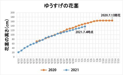 20210704ユウスゲ花茎高.jpg