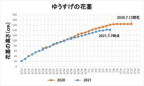 20210707ユウスゲ花茎高.jpg