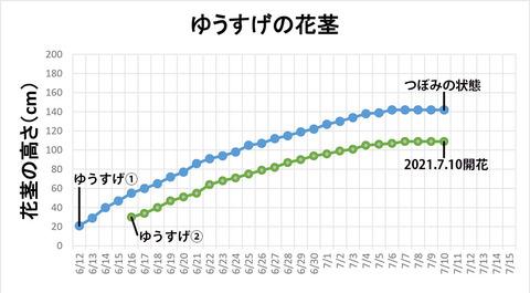 20210710ユウスゲ花茎高re.jpg