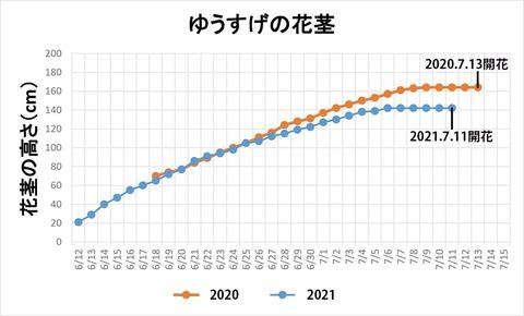 20210711ユウスゲ花茎高.jpg