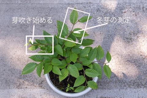 20210801buna_su_8y_01c.jpg