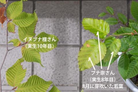 20210821buna_su_8y_04.jpg