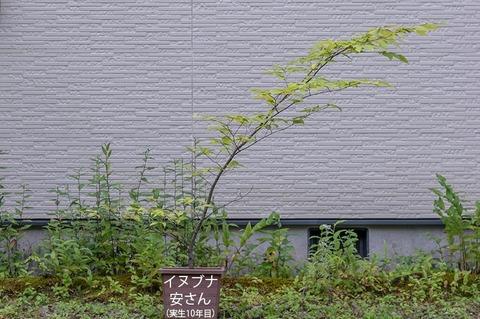 20210821inubuna10y_an_00.jpg