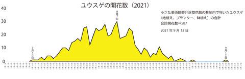 2021ユウスゲ開花数グラフ02.jpg