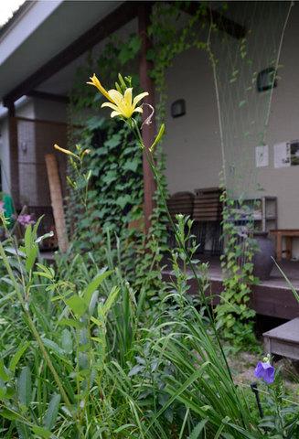 yusuge0801.jpg