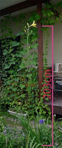yusuge0809-01.jpg