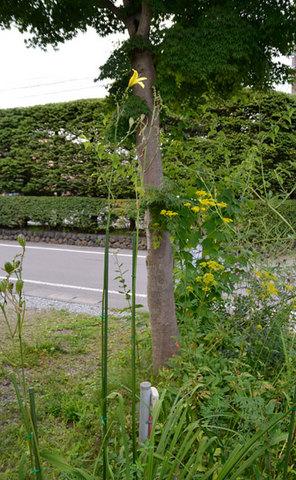 yusuge0829.jpg